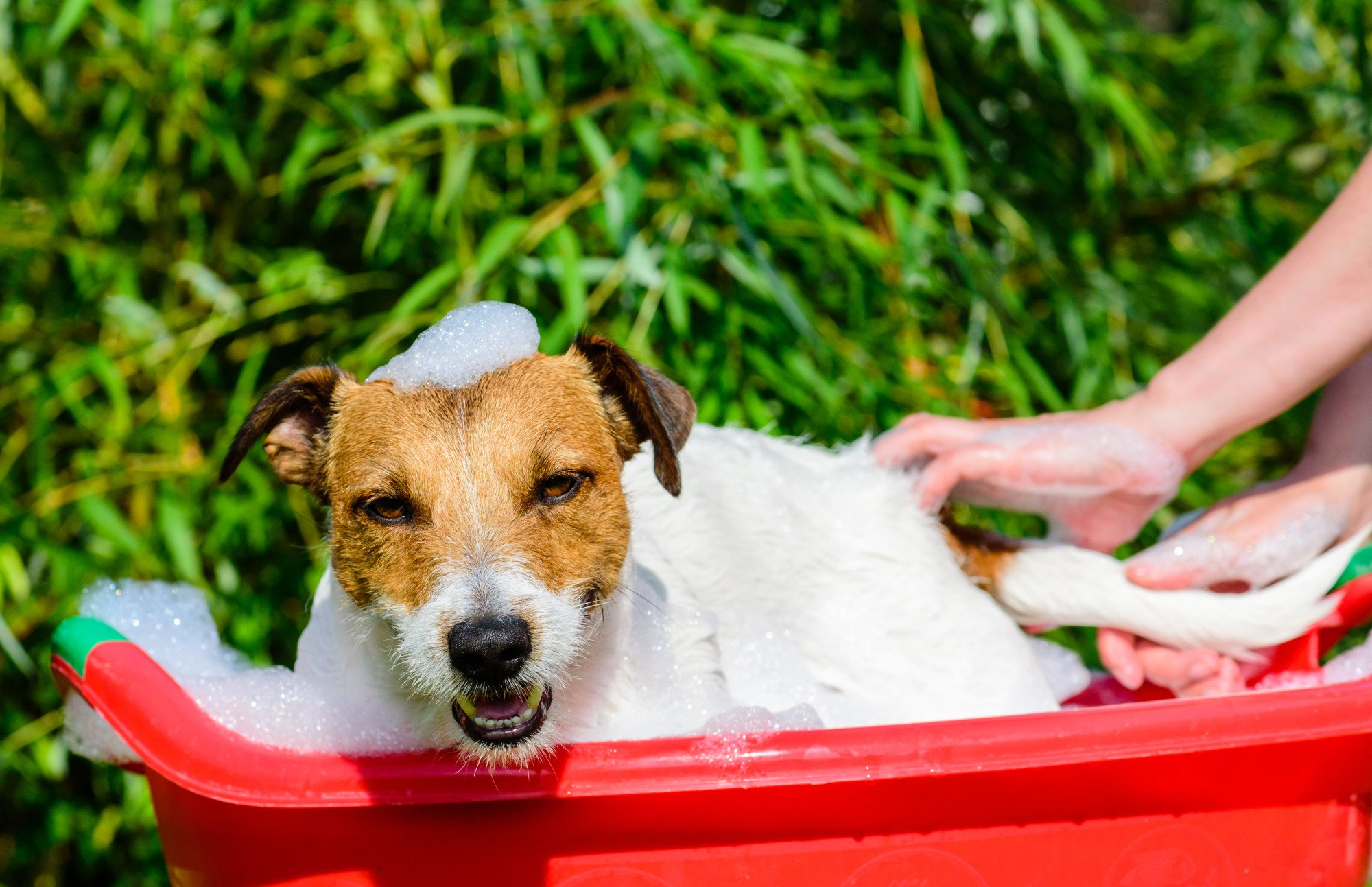 The Top 10 Tips for Getting Rid of Dog Smell in Your Home